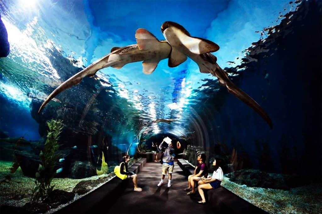 Siam Ocean World für Kinder in Bangkok